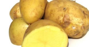 Potatoes – irreplaceable food