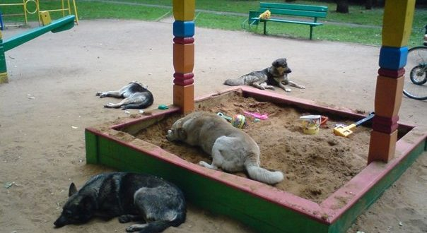 The place of the dogs is not on the streets and playgrounds