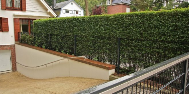 There are over 500 species of evergreen and deciduous plants suitable for hedges