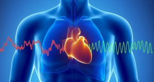 For 1 minute our heart pushes in the body from 3 to 5.2 liters of blood
